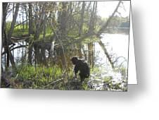 Dog Exploring Mississippi River Bank Greeting Card
