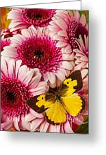 Dog Face Butterfly On Pink Mums Greeting Card