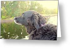 In The Autumn The Dog Looks Back At The Summer   Greeting Card