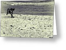 Dog Frolicking On A Beach Greeting Card