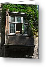 Dog In A Window Above The Canal In Bruges Belgium Greeting Card