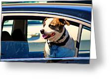 Dog In Car Greeting Card