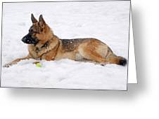 Dog In Snow Greeting Card by Sandy Keeton