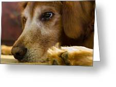 Dog In Thought  Greeting Card