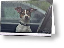 Dog Looking Out Car Window Greeting Card