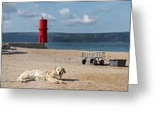 Dog Lying On The Beach In Front Of Red Lighthouse Of Cres Greeting Card