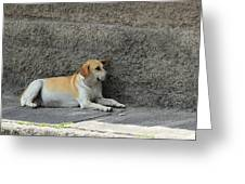 Dog Next To A Wall Greeting Card