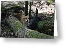 Dog On A Log Greeting Card