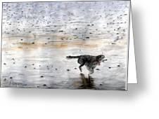 Dog On Beach Greeting Card