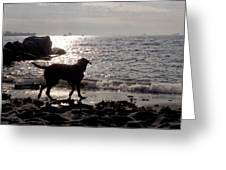 Dog On Beach Wc 2 Greeting Card