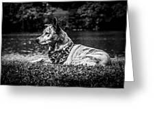 Dog On The Lake Greeting Card