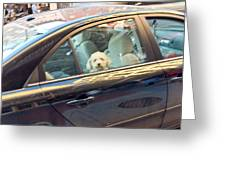 Dog On The Move Greeting Card