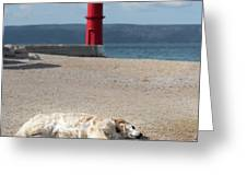 Dog Sleeping On The Beach In Front Of Red Lighthouse Of Cres Greeting Card