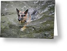 Dog Swimming In Cold Water Greeting Card