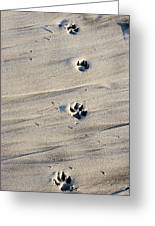 Dog Tracks In The Sand At Carmel Beach Greeting Card