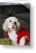 Dog Under Umbrella Greeting Card by Elena Elisseeva