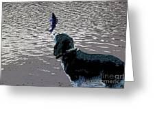 Dog Vs Perch 3 Greeting Card
