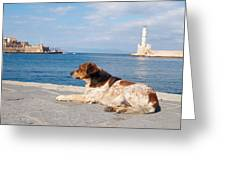 Dog Watch Greeting Card