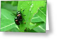 Dogbane Beetles Greeting Card
