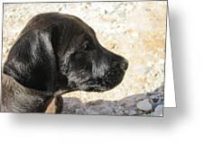 Doggi Greeting Card
