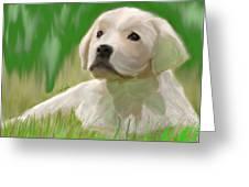 Doggie Seems Sad Greeting Card