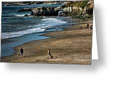 Dogs Beach Santa Cruz California Nature  Greeting Card