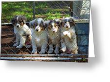 Dogs. Let Us Out #2 Greeting Card