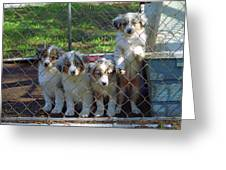 Dogs. Let Us Out #3 Greeting Card