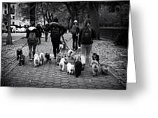 Dog Walking Greeting Card