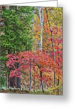 Dogwood And Cedar Greeting Card