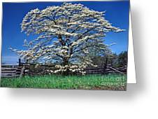 Dogwood And Rail Fence Greeting Card