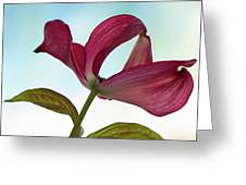 Dogwood Ballet 3 Greeting Card