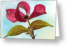 Dogwood Ballet 4 Greeting Card