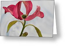 Dogwood Ballet 5 Greeting Card