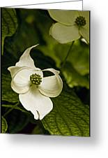 Dogwood Ballet Greeting Card
