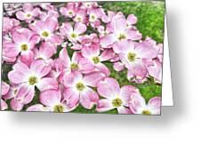 Dogwood Beauty Greeting Card