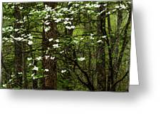 Dogwood Blooming In Forest Greeting Card