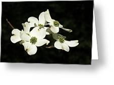 Dogwood Blooms Greeting Card