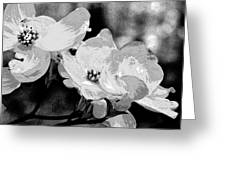 Dogwood Blossoms - Black And White Greeting Card