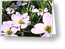 Dogwood Blossoms Pair Up Greeting Card