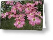 Dogwood Blossoms Greeting Card