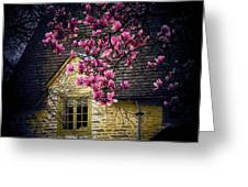 Dogwood By The Window Greeting Card