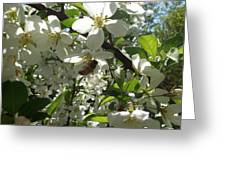 Dogwood Daze Greeting Card by Carrie Viscome Skinner