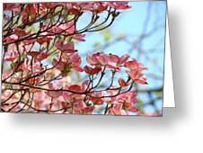 Dogwood Flowering Trees Pink Dogwood Flowers Baslee Troutman Greeting Card