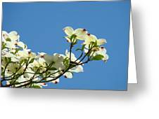 Dogwood Flowers Art Prints White Flowering Dogwood Tree Baslee Troutman Greeting Card