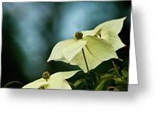 Dogwood Flowers In Streaming Blue Light Greeting Card