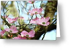 Dogwood Flowers Pink Dogwood Tree Landscape 9 Giclee Art Prints Baslee Troutman Greeting Card