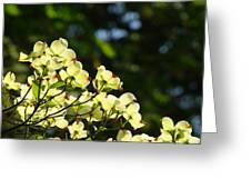 Dogwood Flowers White Dogwood Tree Flowers Art Prints Cards Baslee Troutman Greeting Card