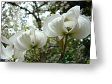 Dogwood Flowers White Dogwood Trees Blossoming 8 Art Prints Baslee Troutman Greeting Card