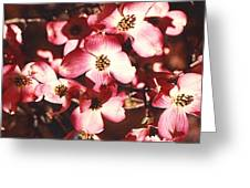 Dogwood Harmony Greeting Card